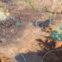 Age of Wonders: Planetfall'da Harita Oluşturma #1