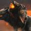 Total War Saga: TROY'da Kerberos